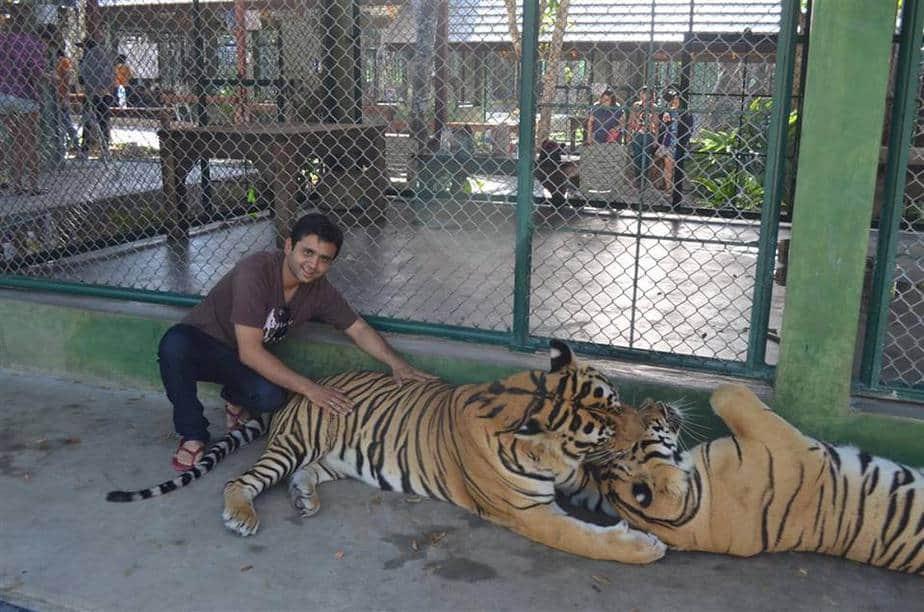 things to do in phuket tiger kingdom