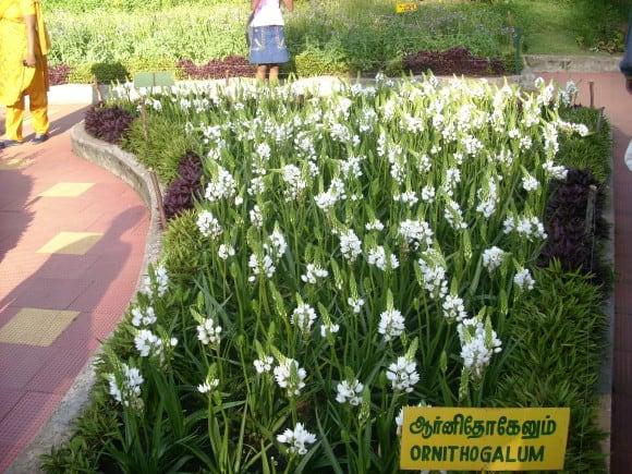 Beautiful Flowers at Chettiar Park, Kodaikanal