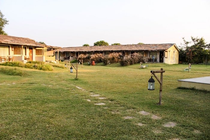 Asiatic Lion lodge gir