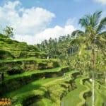 Talelagang Rice Fields