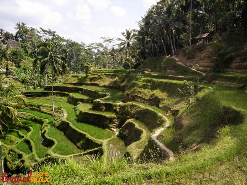 Tegalalang rice fields ubud