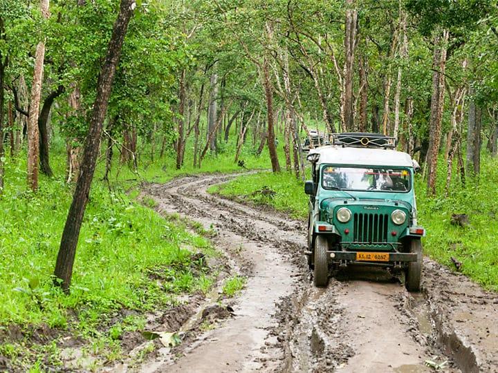 Muthanga wildlife sanctuary during rains