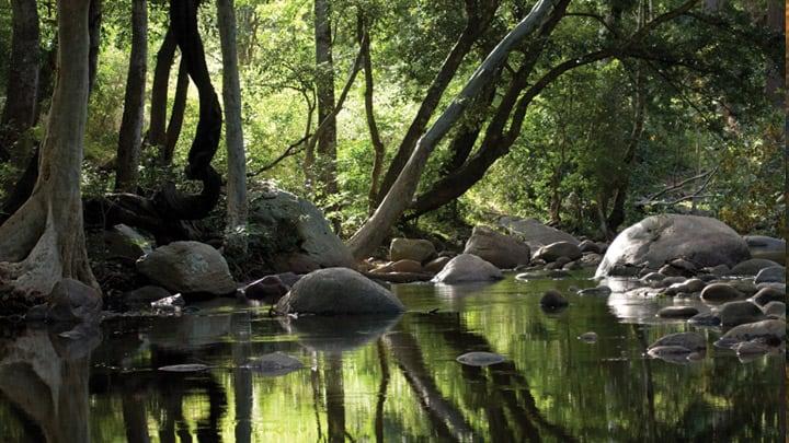 chinnar_wildlife_sanctuary_in_idukki20131031103529_218_1