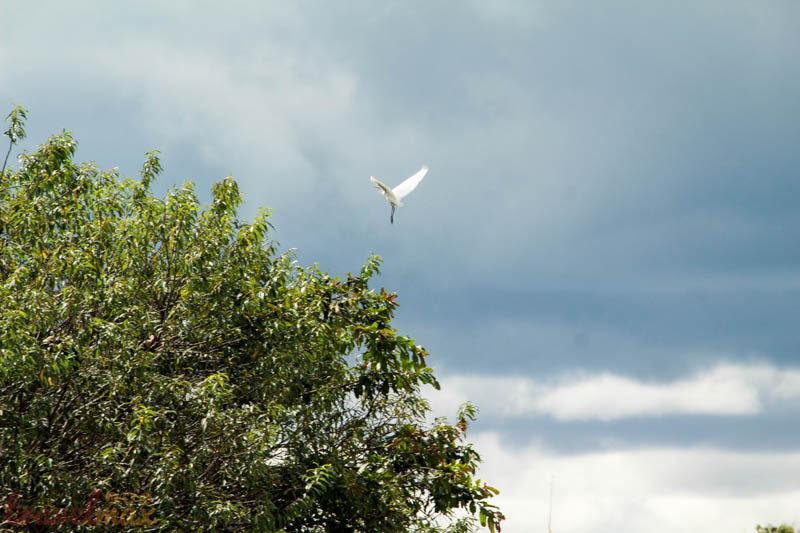 Ranganathitu Bird Sanctuary